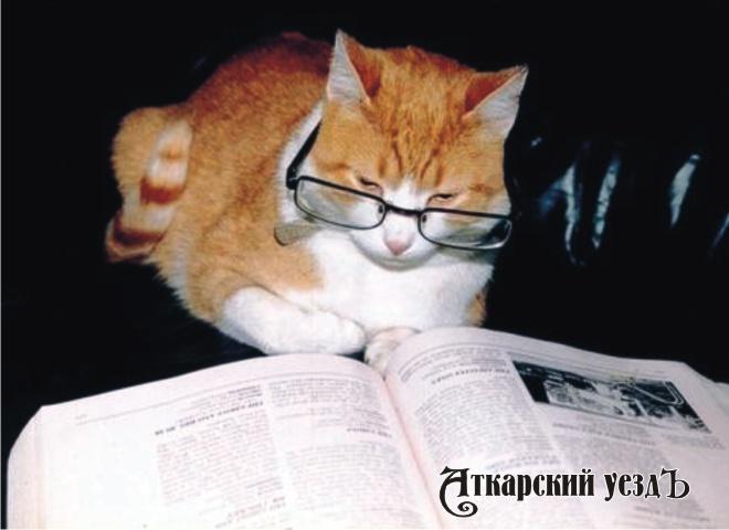Кошки ничуть неглупее собак— Исследование