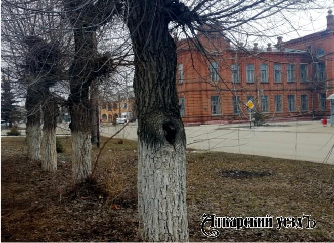 ВБелгородской области предполагается штормовой ветер— МЧС