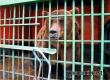 Пьяный аткарчанин залез в вольер зоопарка поздороваться с медведем Савелием
