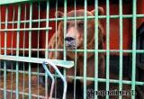 В Аткарском зоопарке вышли из спячки белки, барсук и 600-килограммовый медведь Савелий