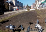 Весенний день восьмое марта. Фотовзгляд «Аткарского уезда»