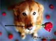 Быть рядом с хозяином – для собаки уже счастье и награда