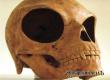 Обнаруженному в Дании странному черепу приписывают инопланетное происхождение