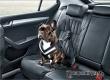Россиянам запретят перевозку животных в легковых авто без удерживающих устройств