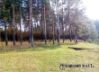 78-летний пенсионер спилил шесть сосен в лесу в Аткарском районе