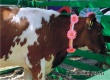 Муммовские животноводы участвуют в федеральной агровыставке «Золотая осень-2016»