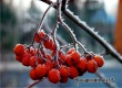 Синоптики прогнозируют в Саратовской области заморозки по ночам до -5°С