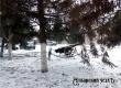 Синоптики обещают сильный ветер, снежный поземок и мороз до -17°С