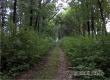 Аткарский пенсионер покончил с собой в лесу под Энгельсом