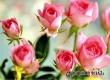 В Саратове и Энгельсе пока нет желающих купить тур на Фестиваль роз