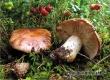 Юная москвичка отравилась грибами под Аткарском