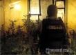 Саратовцы выращивали коноплю на съемной квартире