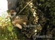 Спасатели вызволили застрявшую в сетке-рабице собаку