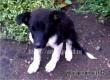 Аткарчанка спасла щенка на улице и теперь ищет ему новых хозяев