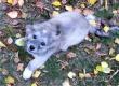 Сердобольные аткарчане ищут хозяина потерявшемуся щенку