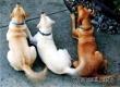 Ученые разгадали, какую информация передает виляющий хвост собаки