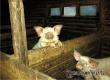 Как в аткарских селах свиней водили: рассказ от бывшего жителя Гайворона