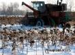 Погода января позволила продолжить уборку подсолнечника под Аткарском