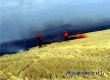 Кабмином РФ введен запрет на выжигание травы и костры у дорог