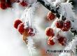 На смену морозному Рождественскому сочельнику придет короткое потепление