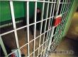 79 аткарчан в 2016 году арестованы за неуплату штрафов по линии ГИБДД