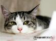 Специалисты считают мифом приписанный кошкам эгоизм