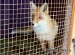 В Аткарском зоопарке рассказали, как зимуют медведь Савелий, лиса Лиза и спасенные лебеди