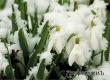 Синоптики не исключают выпадение в Аткарске снега в воскресенье