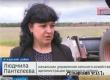 Аткарские аграрии страдают от непогоды и надеются на рост цен зерна