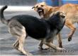 Радаев потребовал усилить борьбу с бездомными собаками в регионе