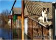За время паводка из зон затопления в Аткарске эвакуированы 180 человек