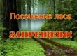 Запрет на посещение гражданами лесов продлен до конца июня