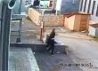 Прыжок дамы с собачкой из отеля после кражи попал на видео