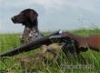 25 августа открывается летне-осенняя охота на пернатую дичь