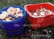 В Роспотребнадзоре дали рекомендации любителям грибов
