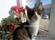 Аткарчане просят помочь найти выпавшую с балкона кошку