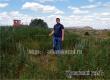 В Аткарске бульдозером уничтожили огромное поле конопли