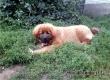 За пропавшего в Аткарске щенка пообещали крупное вознаграждение