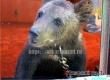 В зоопарке Аткарска появился маленький медвежонок Машенька
