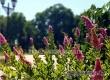 Гидрометцентр: сохранится жара до +35°С и ожидаются грозы
