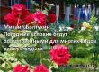 Фестиваль роз в Аткарске состоится при жаркой погоде без осадков