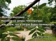 Михаил Болтухин: Через два дня жаркой погоды ожидается похолодание
