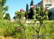 Синоптики прогнозируют жаркий четверг с грозой