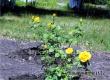Синоптики: аномальная жара в Аткарске продолжается
