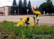 В Аткарском районе ожидается жаркое и облачное воскресенье