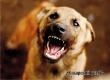 Пенсионер из Озинок отсудил у властей деньги за укус бродячей собаки