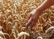Аткарские земледельцы помогли региону собрать 1-й млн тонн зерна