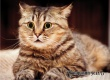 Помогают при десятках болезней – ученые рассказали о пользе кошек