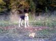 Аткарчане по-прежнему кормят сидящего 6-ю неделю у трассы пса