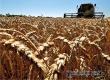 Более 100 тысяч тонн зерна собрали в Аткарском и еще 12 районах